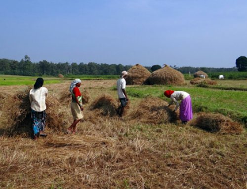 NAM emphasises the importance of family farming in sustainable development