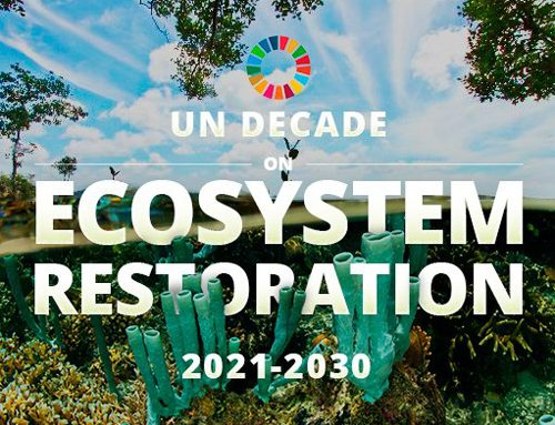 NAM welcomes the adoption of United Nations Decade on Ecosystems Restoration (2021-2030)